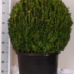 zwarte-pot-bol-70-cm