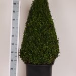 zwarte-pot-kegel-100-cm