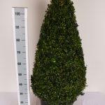 zwarte-pot-kegel-100-cm-schuin