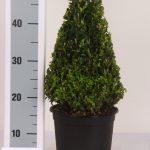 zwarte-pot-kegel-30-cm