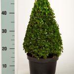 zwarte-pot-kegel-35-cm