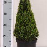 zwarte-pot-kegel-40-cm
