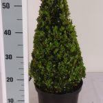 zwarte-pot-kegel-40-cm-schuin