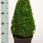 zwarte-pot-kegel-45-cm