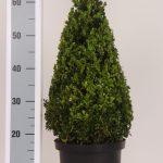 zwarte-pot-kegel-50-cm