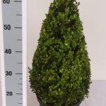 zwarte-pot-kegel-50-cm-schuin