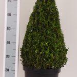 zwarte-pot-kegel-60-cm
