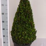 zwarte-pot-kegel-60-cm-schuin