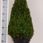 zwarte-pot-kegel-70-cm