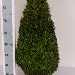 zwarte-pot-kegel-70-cm-schuin