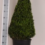 zwarte-pot-kegel-80-cm