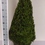 zwarte-pot-kegel-80-cm-schuin