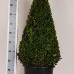 zwarte-pot-kegel-90-cm